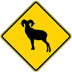 Bighorn Sheep Road Warning Sign - 24x24 - Reflective Aluminum MUTCD Compliant W11-18 Big Horn Sheep Warning Sign